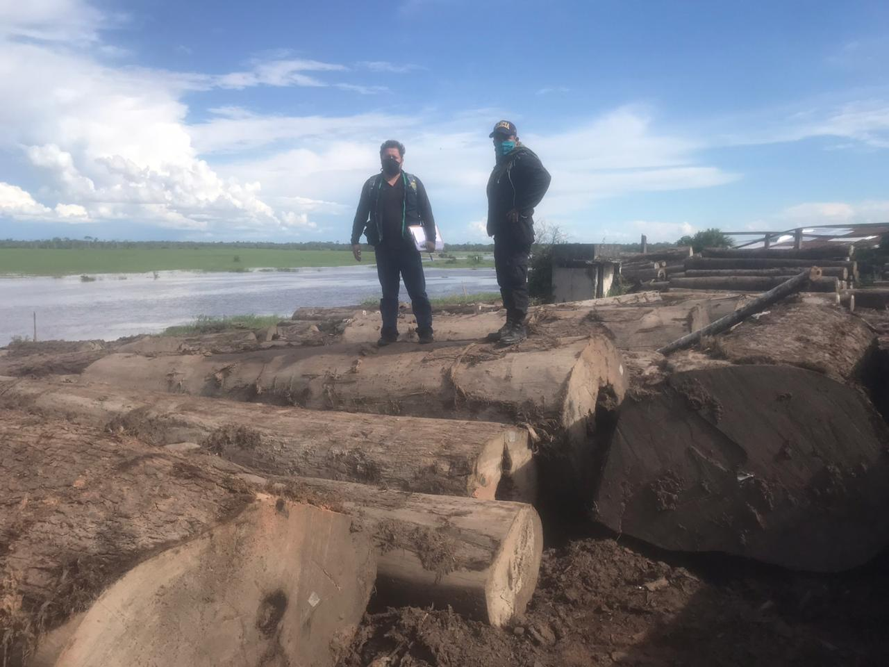 192 m3 of Marupa, Cachimbo, and Tornillo logs seized at sawmill in Pucallpa