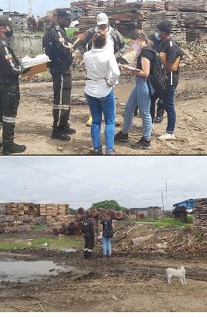 103 m3 of Saman logs seized at a lumber yard in Yaguachi