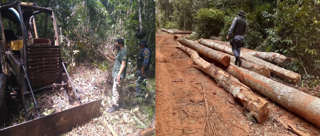 117 logs seized at illegal logging site in Feliz Natal