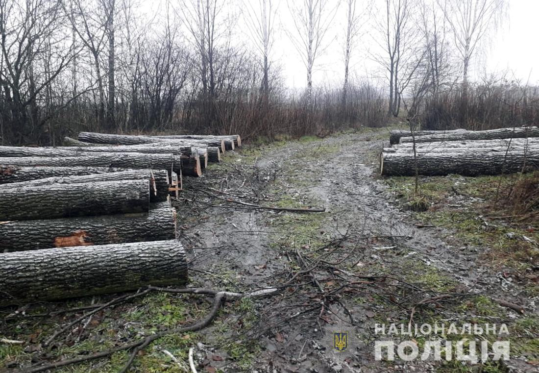 20m3 of Oak logs seized in Mala Volytsya