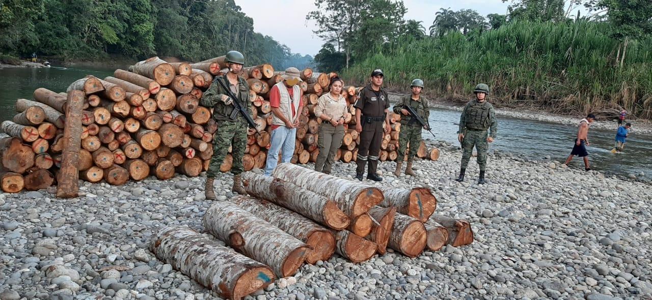 31 m3 of Balsa logs seized on the Rio Auguarico in Sevilla