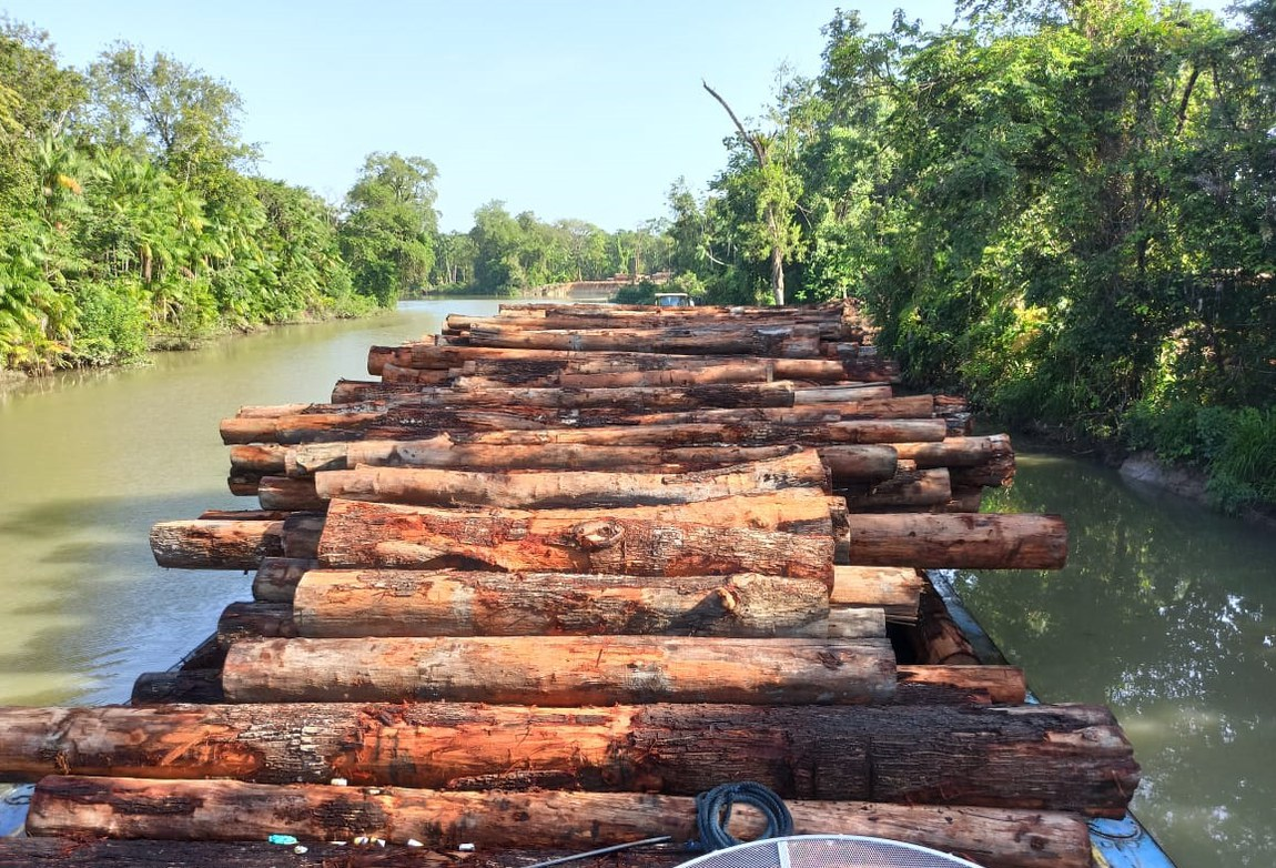 600 m3 of logs seized in Vila do Conde