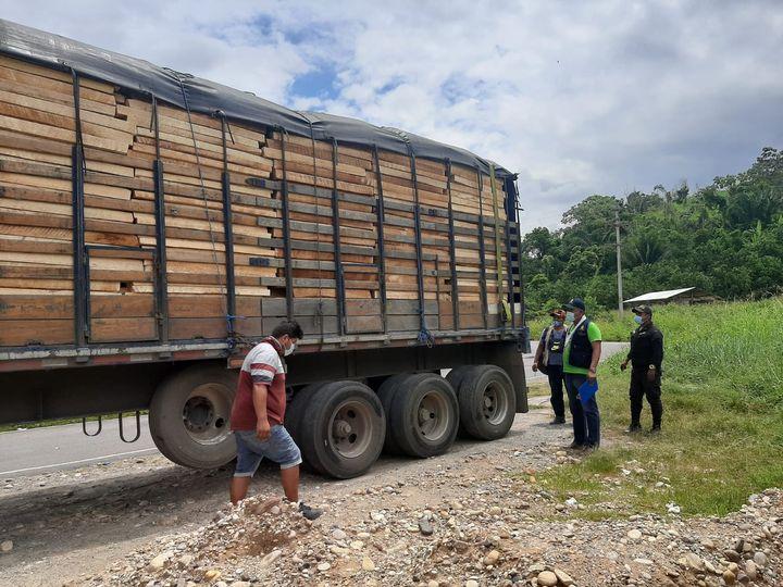 66 m3 of Balsa wood seized near Pajarillo