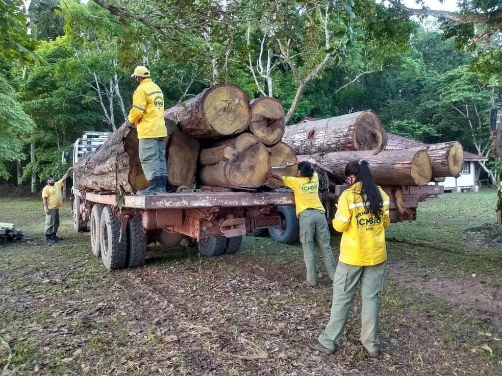 Three truckloads of Ipe logs seized in Tapajós National Forest