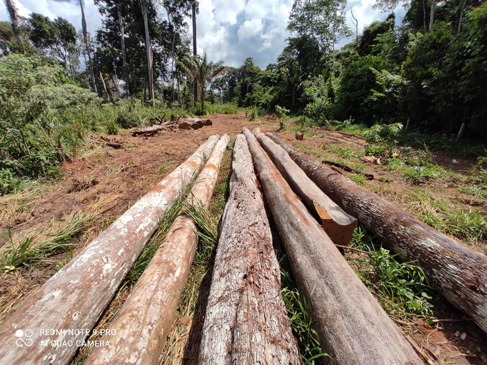 355 m3 of alleged illegal wood seized in Acrelândia