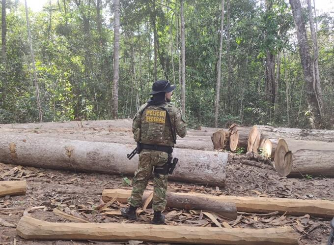 12 timber companies suspended during investigation of illegal logging in Tubarão-Latundê