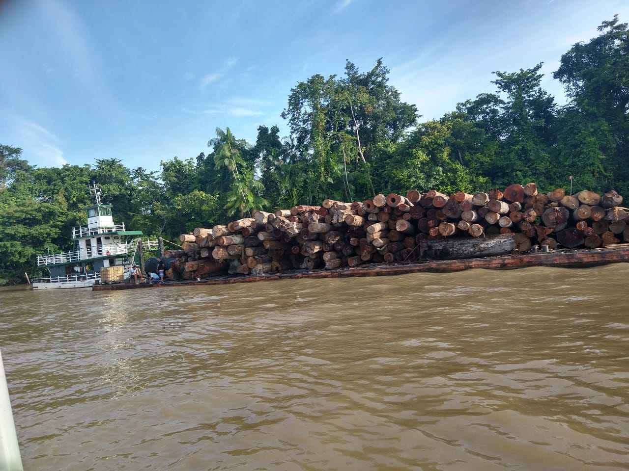 300m3 of illegal timber seized near Igarapé-Miri