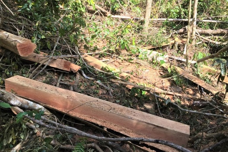 37 prosecuted for illegal logging in the Ea So Nature Reserve