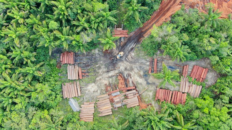 Eight timber companies suspended and 903m3 of wood seized in southern Roraima